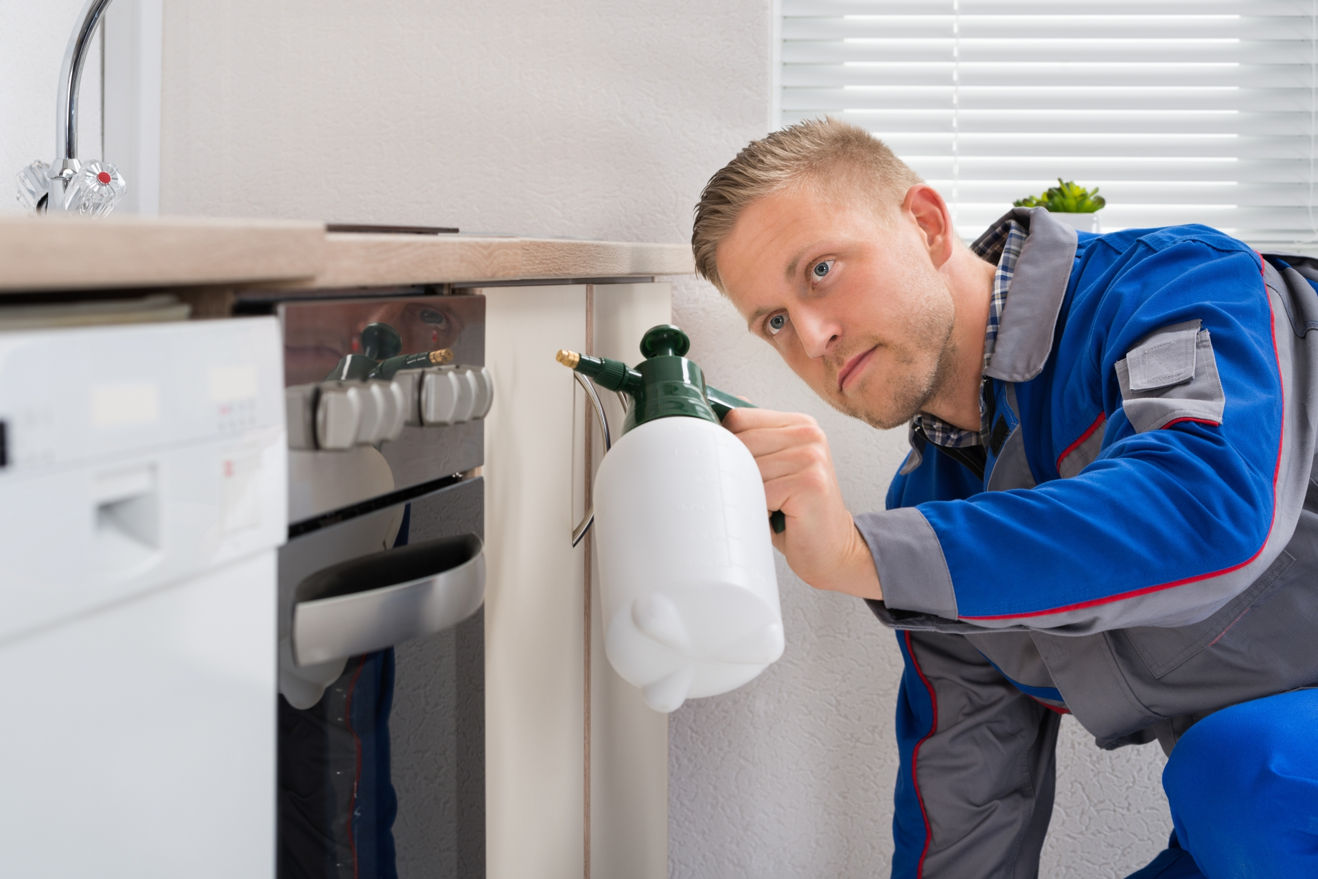 Pest Inspection, Pest Control in Hammersmith, W6. Call Now 020 8166 9746