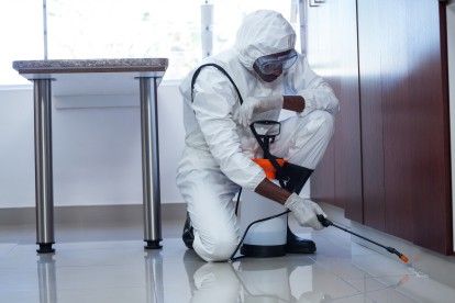 Emergency Pest Control, Pest Control in Hammersmith, W6. Call Now 020 8166 9746